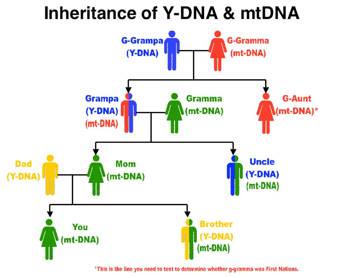 DNA Basic Primer